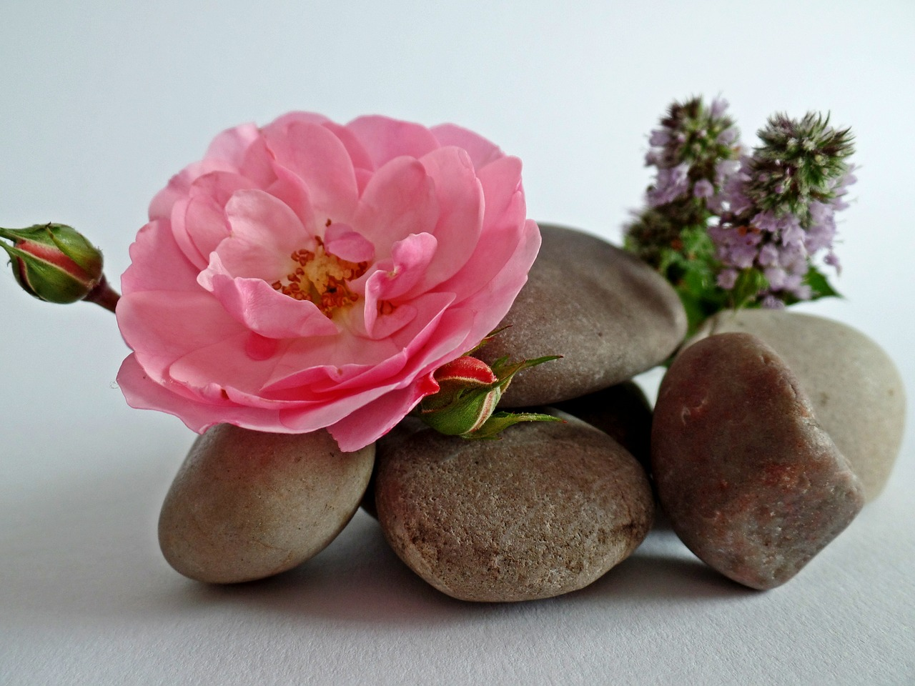 Various flowers arranged around a pile of meditation stones.